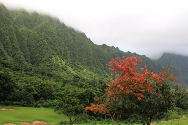 A tree with red leaves in front of a green mountain in the clouds