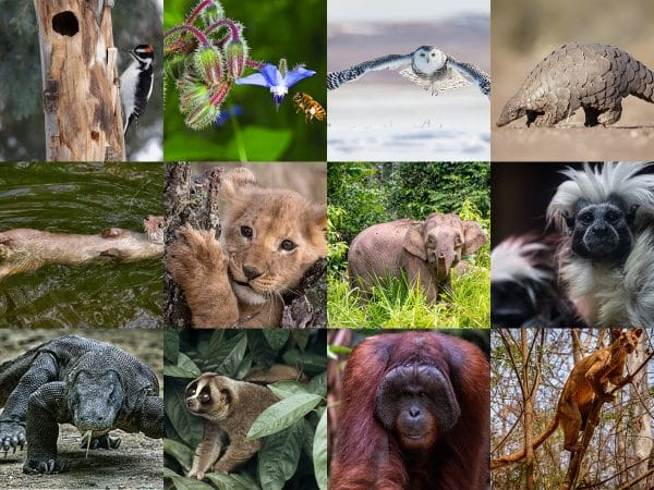 A collage of 12 animals of endangered species